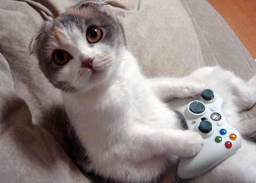 gato jugando xbox 360